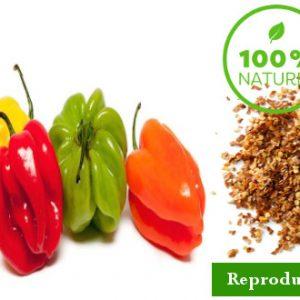 semence piment EFIA - Premium Hortus