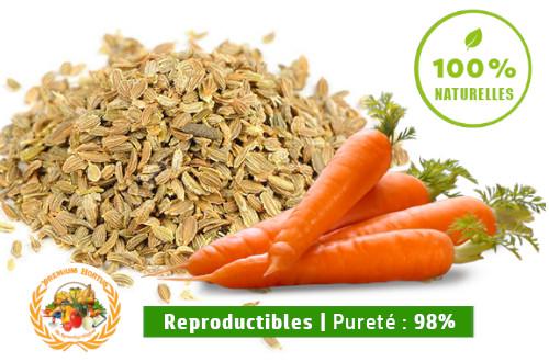 semence carotte PREMIUM HORTUS