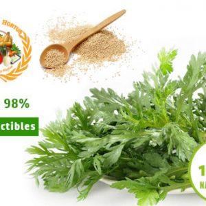 Semence Artemisia Anua Bio - PREMIUM HORTUS