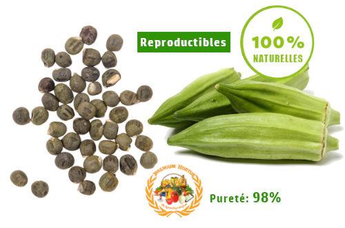 semence gombo hounsoufé- bio- PREMIUM HORTUS